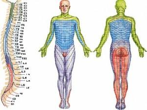 diagnostika-porajeniy-spinnomozgovyh-nervov-polonskiy-s-p-1850-large